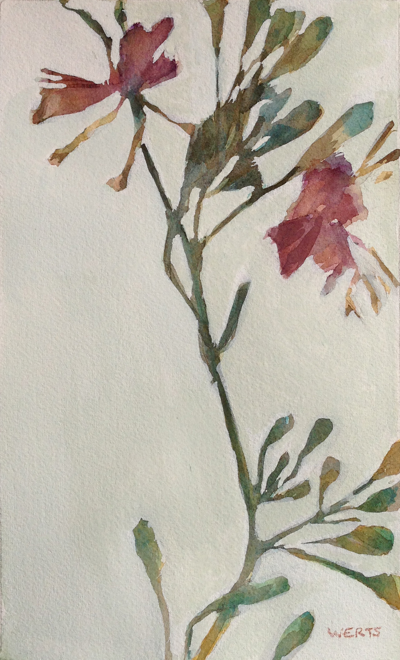 Pressed Flowers 3 6x10 Watercolor On Paper Diana Werts Studio